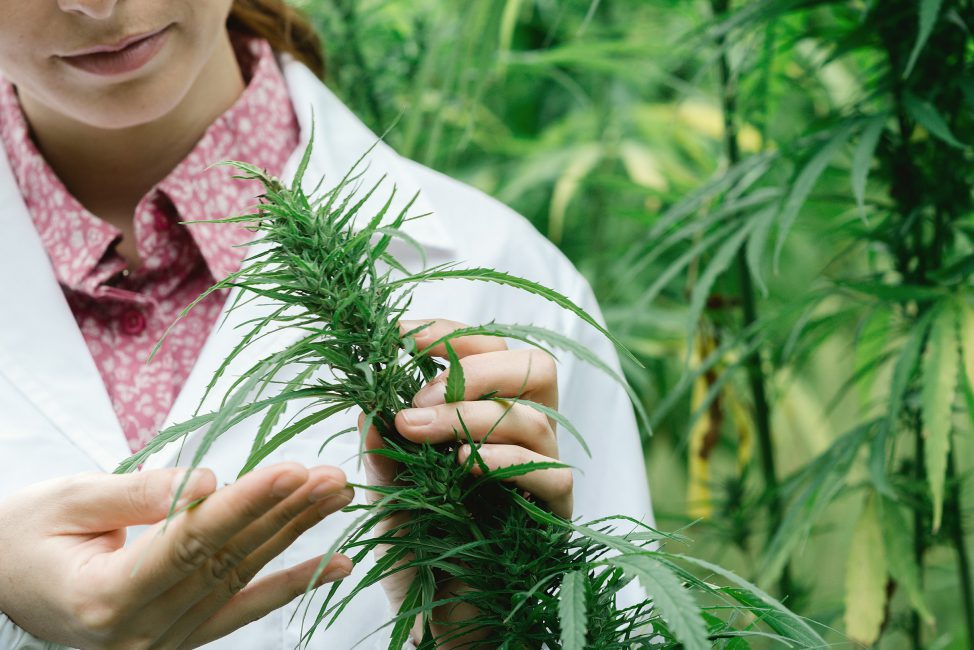 Insurance can be confusing, so here's a quick guide to four important lines of coverage any cannabis business will want to consider.